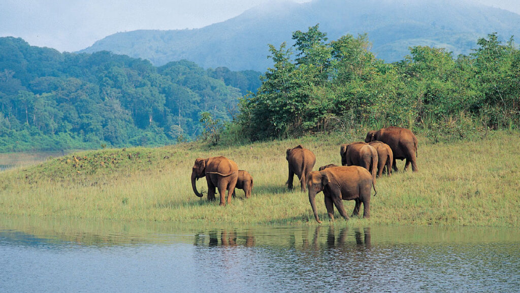 Embrace The Wilderness Within You With Wildlife Sanctuaries Of Kerala 1
