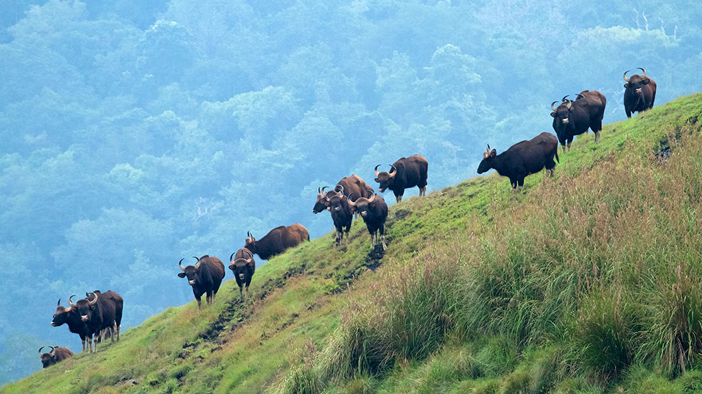 Embrace The Wilderness Within You With Wildlife Sanctuaries Of Kerala 2