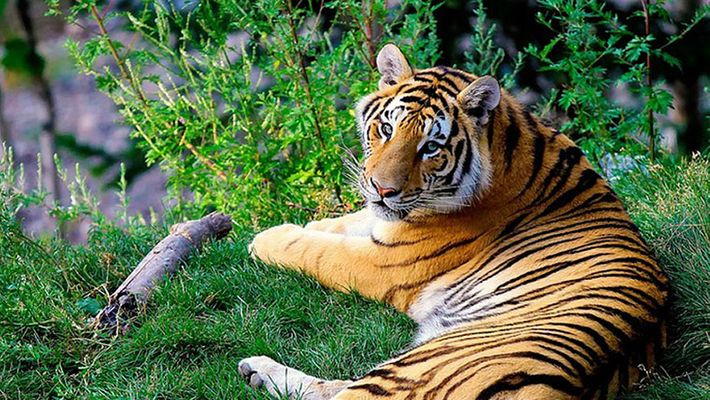 Embrace The Wilderness Within You With Wildlife Sanctuaries Of Kerala 3
