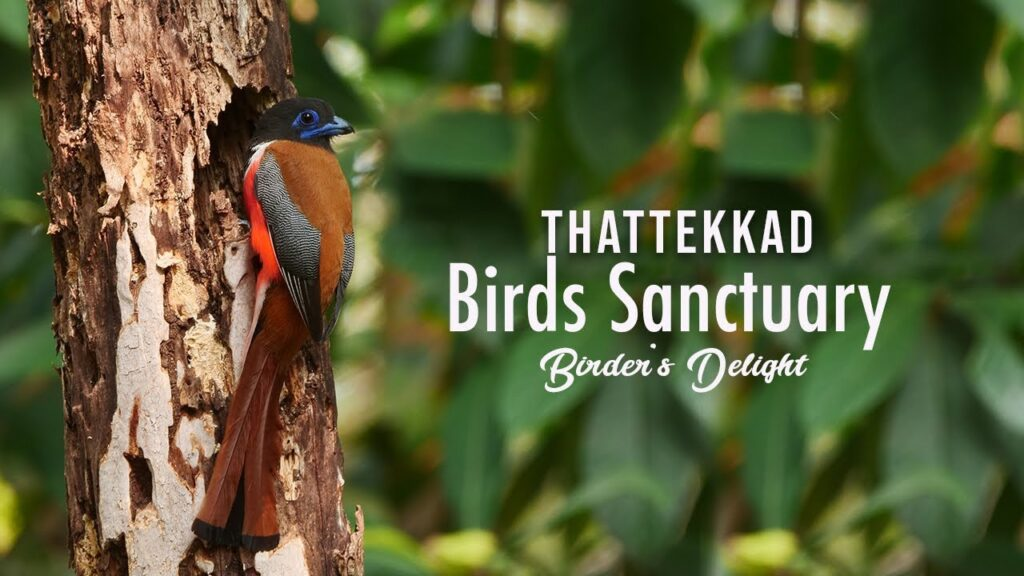 Embrace The Wilderness Within You With Wildlife Sanctuaries Of Kerala 4