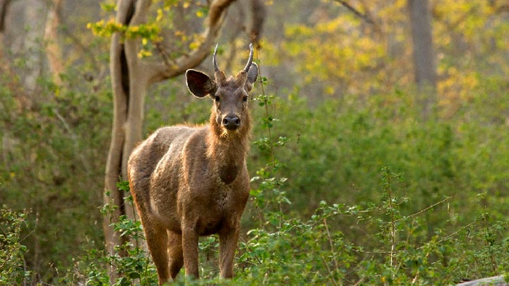 Embrace The Wilderness Within You With Wildlife Sanctuaries Of Kerala 5