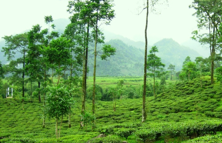 Incredible India: Best Tourist Attractions For Tourists In The East 3